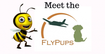 Meet The Fly Pups
